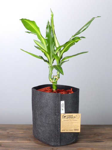 Root Pouch Black #2 Gallon / 8 Liter ohne Griffe