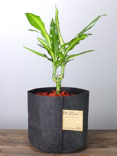 Root Pouch Black #3 Gallon / 12 Liter ohne Griffe