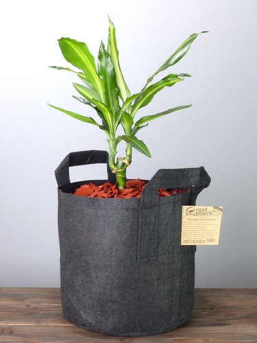 Root Pouch Black #5 Gallon / 16 Liter mit Griffen
